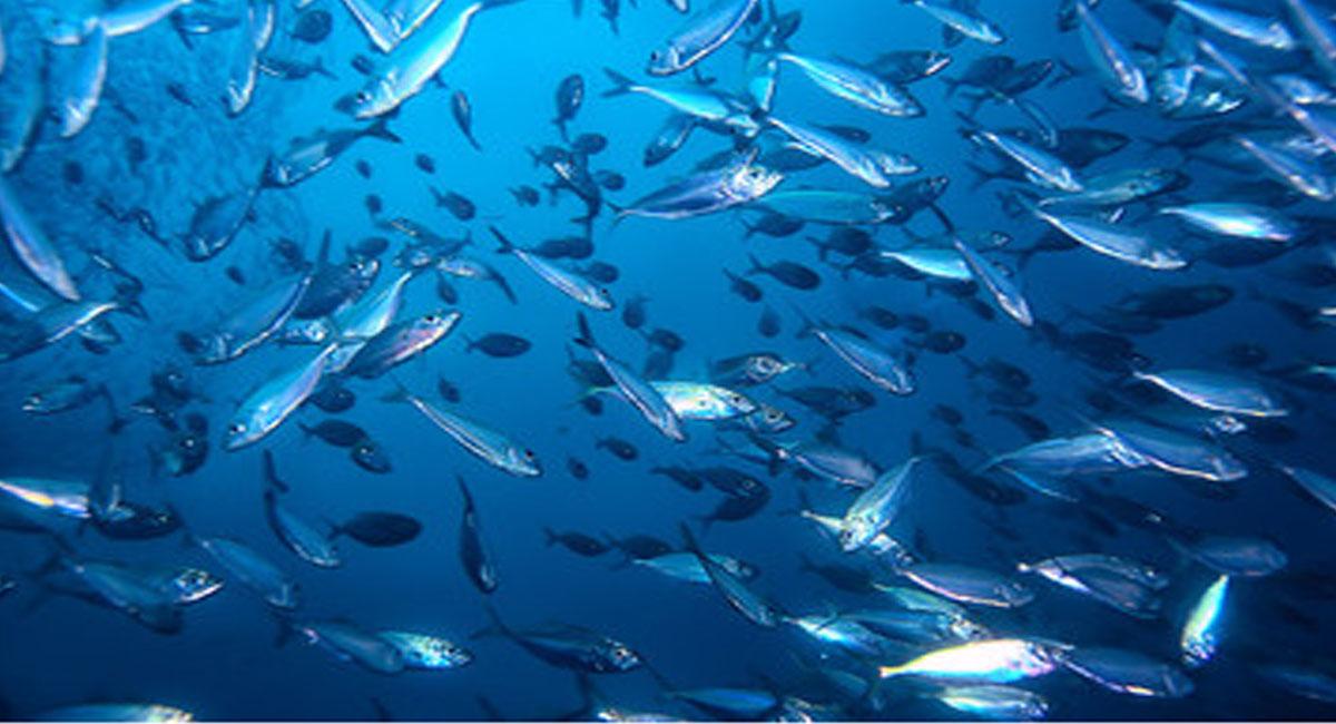 Νομοθεσία για την ερασιτεχνικη αλιεια | Online 4U Shop