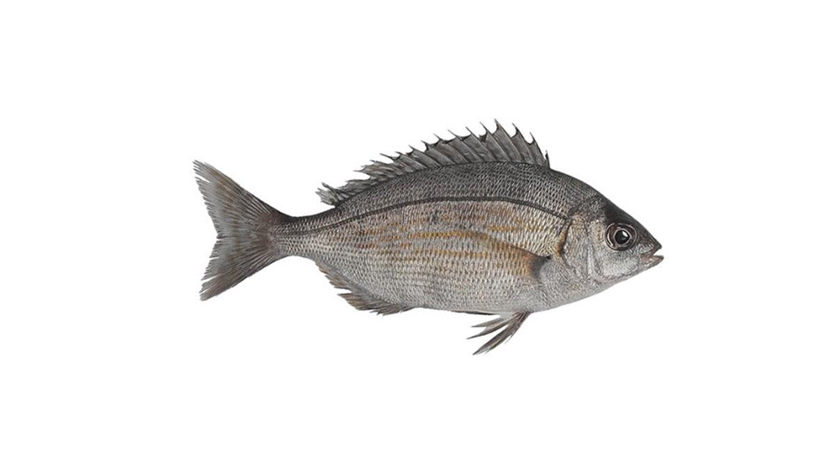 Ψάρεμα καθετής από βάρκα με θήραμα σκαθάρι | Online 4u Shop